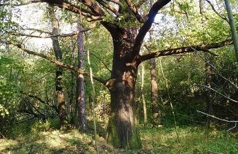 koupě lesního pozemku