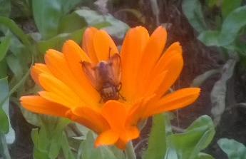 Nádrž na dešťovou vodu, závlaha zahrady