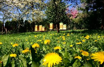 Auto pro včelaře