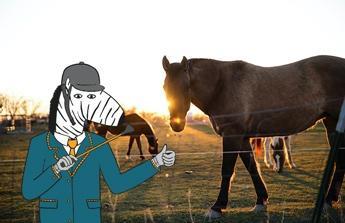 Rozšíření chovu koní a rekonstrukce stájových stání.
