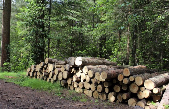 Když se kácí les ....
